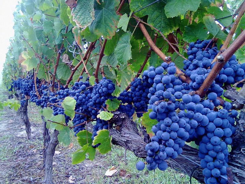 Uma boa Escola é como um bom vinho